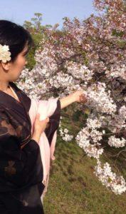 手宮公園桜見