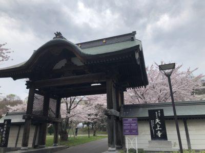 天上桜の桜