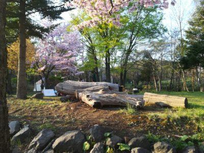 長橋なえぼ公園桜