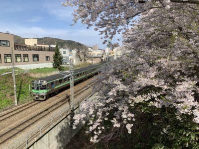 小樽花園桜